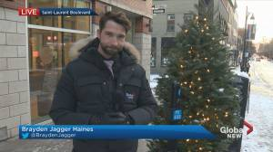 Christmas trees decorating Saint Laurent Boulevard are disappearing (01:31)