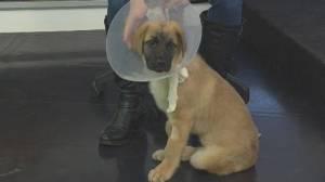 Adopt A Pet: Meet three-month-old Neon