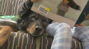 UBC study says dogs help young children with reading