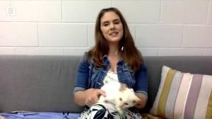 Adopt a Pet with Saskatoon SPCA