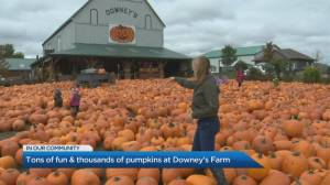 Explore PumpkinFest at Downey's Farm this Fall