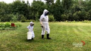 5-year-old boy in New Brunswick learning to become a bee-keeper (02:00)