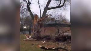 Strong winds, heavy rain cause damage, power outages in Greater Toronto Area (01:52)