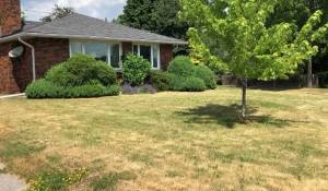 Your lawn will survive the drought