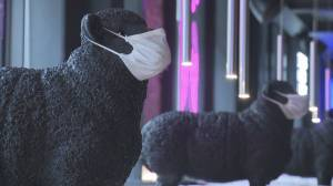 Calgary restaurant owner worries about reaction from anti-mask diners