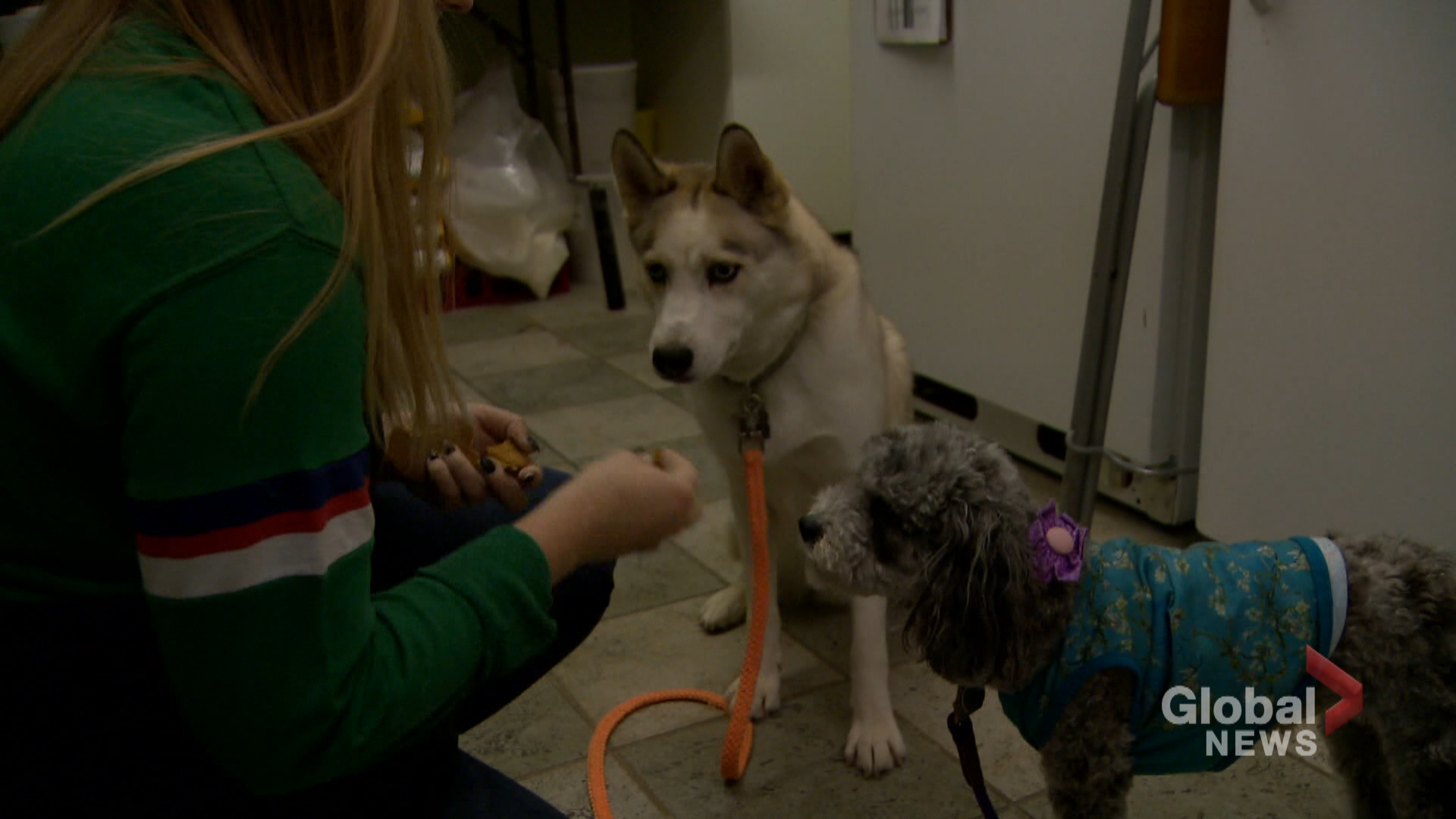 Pumpkin pups: Calgary pet bakery cooks up Halloween treats for dogs