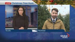 Demand for Christmas trees expected to exceed supply this year (01:25)