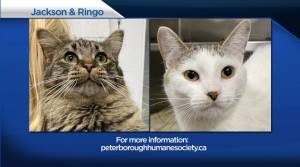 Global Peterborough's Shelter Pet Project for May 21, 2021 (02:23)