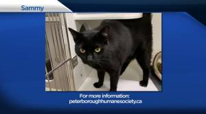 Global Peterborough's Shelter Pet Project for April 30, 2021 (02:54)