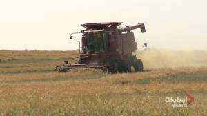 FCC report shows Saskatchewan farmland increasing in value (01:45)