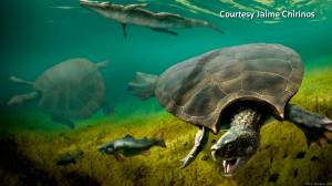 Scientists unearth fossils of one of the largest turtles in history