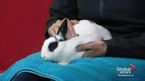 Calgary Humane Society Pet of the Week: Tuxedo (03:30)