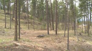 Kelowna community group concerned over wildfire-mitigation project (02:15)
