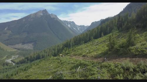 Environmental groups call for reconsideration of clearcutting in remote valley | Watch News Videos Online