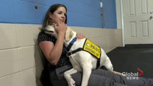 Alberta service dog agency ramps up training to catch up with COVID-19 backlog (01:37)