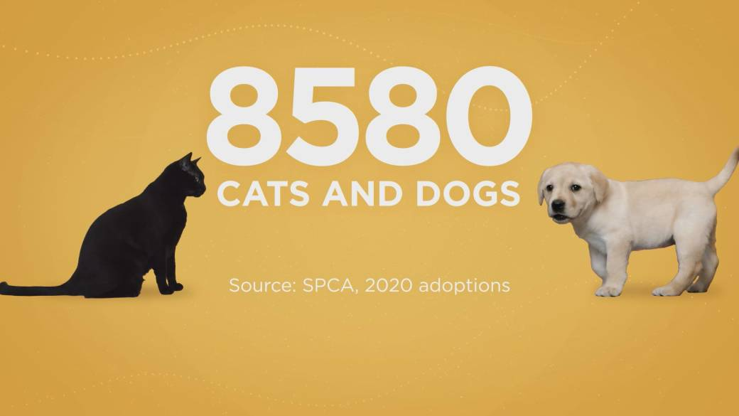 Click to play video: 'Kitten adoptions in B.C. soar during the 2020 COVID pandemic'