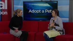 Adopt a Pet: Ophelia