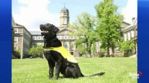 CNIB 2020 Guide Dog Calendar