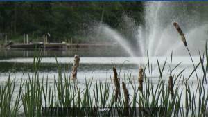 Peterborough Regional Weather Forecast June 11 (01:36)