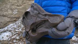 12 year old finds dinosaur fossil at Horseshoe Canyon (06:05)