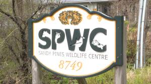 "Sandy Pines Wildlife Centre's ""Baby Shower"" goes virtual (02:27)"