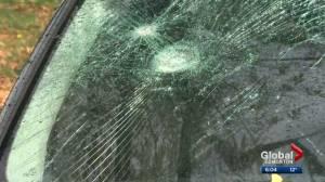 Edmonton police make arrest in Bonnie Doon vandalism spree