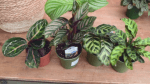 GardenWorks: plants for your home and office