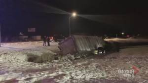 Cows killed in crash west of Peterborough: OPP