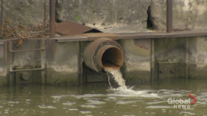 Researchers to start testing sewage for COVID-19 (01:45)