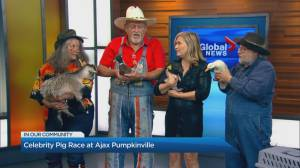 Celebrity Pig Race at Ajax Pumpkinville