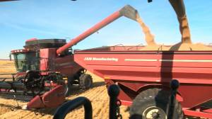 Sask. agriculture industry in the spotlight on Food Day Canada (01:32)