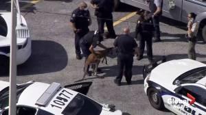 Florida police wrangle wayward kangaroo in Fort Lauderdale