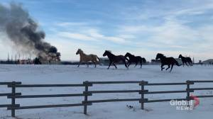 Alberta equine therapy barn goes up in flames, owner vows to rebuild