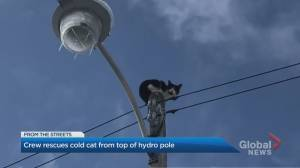 Cat trapped on top of pole rescued by Toronto Hydro (02:18)