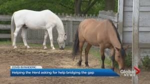 Help the Herd donation program to feed, care for horses during COVID-19