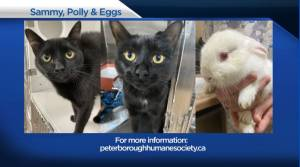 Global Peterborough's Shelter Pet Project for June 4, 2021 (02:22)