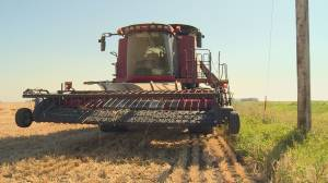 Southern Alberta harvest raises money for Canadian charity fighting food insecurity (01:42)