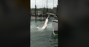 Shark rescue caught on camera