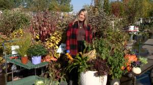 Creating fall colour in your garden