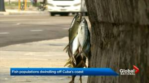 Fish populations dwindling off Cuba's coast