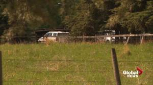 Baby boy, young girl found dead after house fire near Buck Lake in western Alberta (01:44)