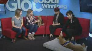 Adopt a Pal: Goldie & Tillie from Manitoba Mutts Dog Rescue Inc (04:11)