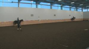 Edmonton equine centre faces COVID-19 restriction exemption standstill (01:45)