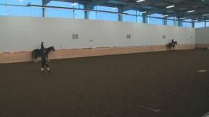 Edmonton equine centre faces COVID-19 restriction exemption standstill (01:45)