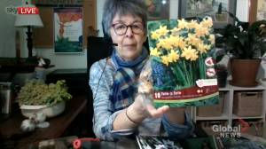 Tips on planting fall bulbs for spring flowers (04:57)