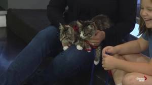 SCARS introduces us to 3 cats who need a new home