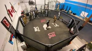 Alberta man balances being an MMA fighter as well as a firefighter (02:04)