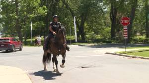The fate of Murney the Kingston police horse up for debate again (02:21)