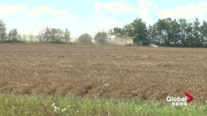 Province and feds provide combined $340M for ranchers after drought-laden summer (01:44)