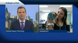 Adopt a Pet: Robby the tabby (04:44)